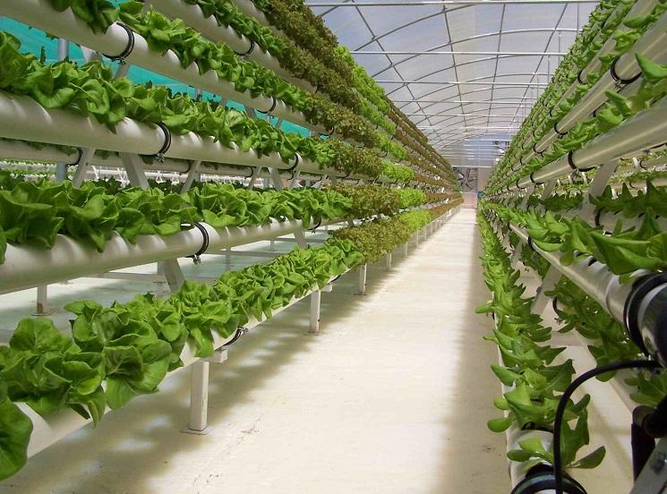 Инновационные теплицы для выращивания овощей 64