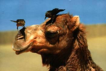 Новые вольеры для верблюдов в зоопарке Риги