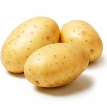 Предприниматели из Украины планируют выращивать в Латвии картофель