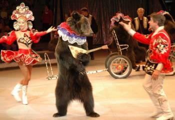 В Риге прошёл протест против использования животных в цирке