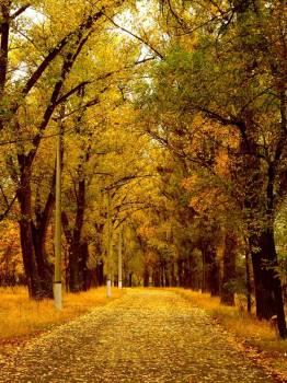 Осень пришла: погода на этой неделе
