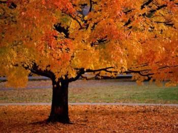 Фото к новости Первая неделя ноября будет радовать теплом и хорошей погодой