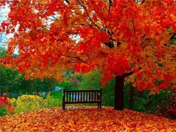 Фото к новости Ноябрь будет тёплым