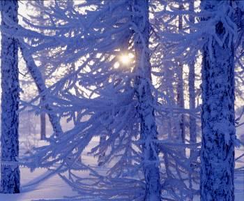 Конец ноября и декабрь в Латвии будет морозная погода