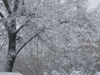 Фото к новости Латвию засыпает снегом