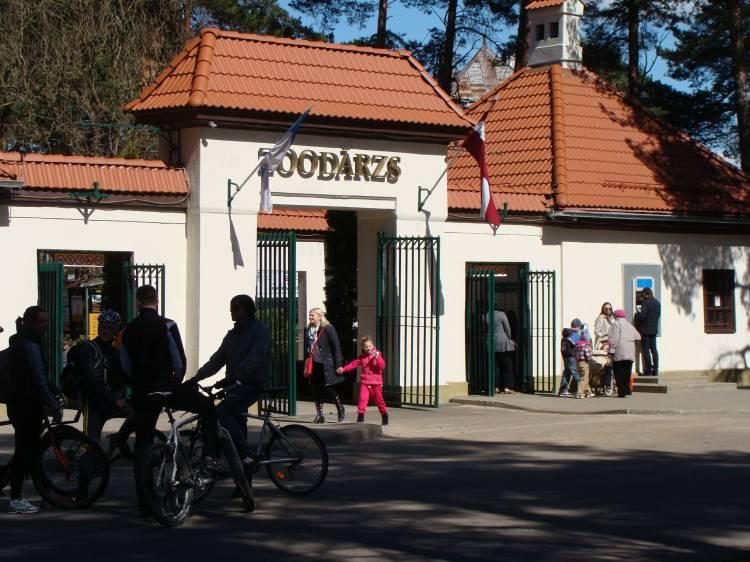 Пингвины Гумбольдта приехали в Рижский зоопарк