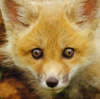 Три латвийские компании вступили в программу Fur Free Retailer